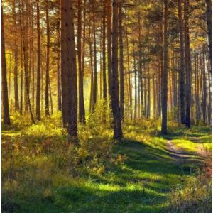FOREST BATHING SESSION