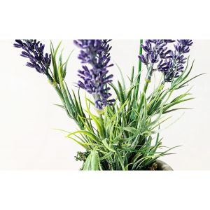 Potted Meadow Lavender
