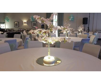 Blossom Trees - prices from £35