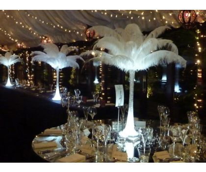 Ostrich Feather Displays. Prices from £30