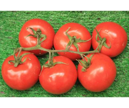 Tomatoes 500g